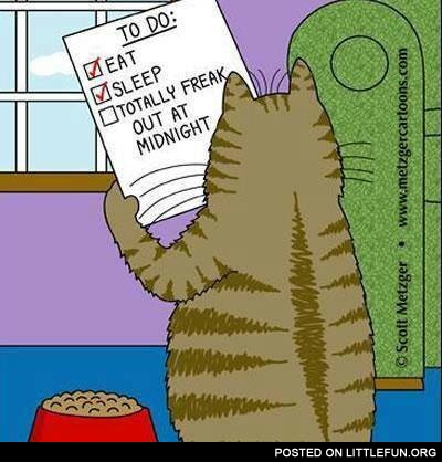Cat's To-do list