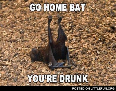 Go home bat, you're drunk