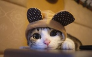 Cat in the hat, cuteness overload
