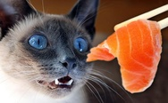 Cat loves sushi