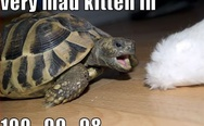 Very mad kitteh in 100.. 99.. 98..