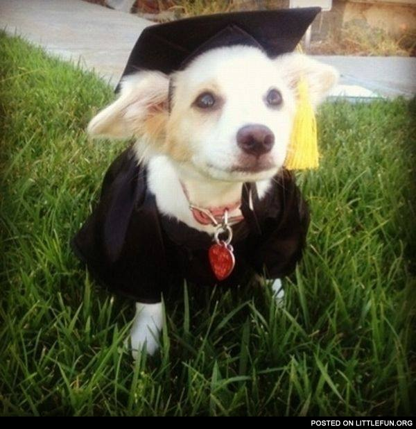 Nice costume, graduated dog