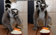 Lemur and cupcakes