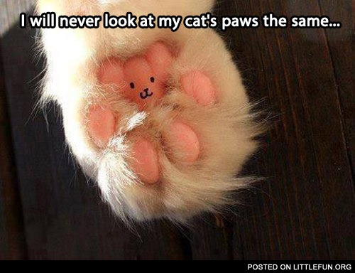 My cat's paw