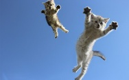 Flying kittens