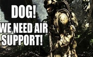 Dog, we need air support