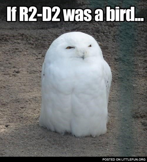 If R2D2 was a bird