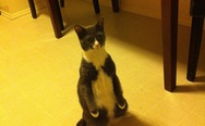 Standing up cat