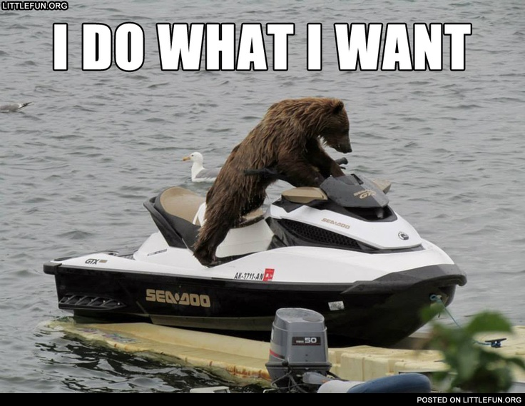 I do what I want. A bear on the water scooter.