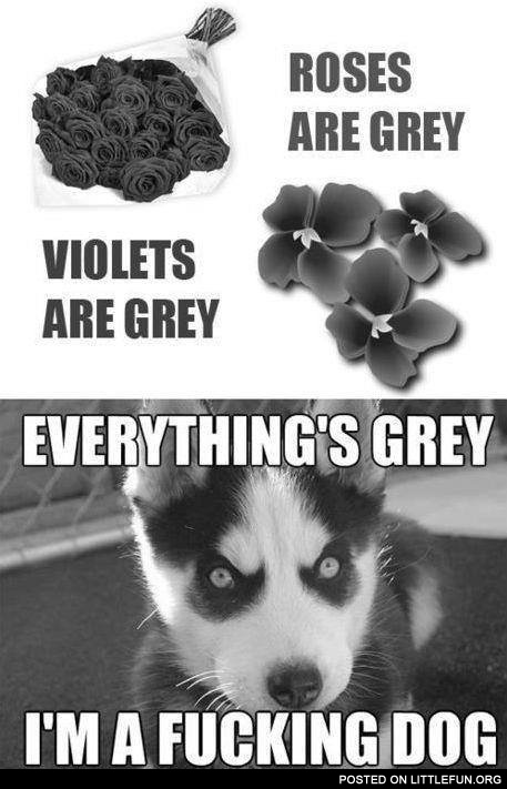 Everithing is grey, I'm a dog