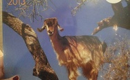 Goats in trees 2013