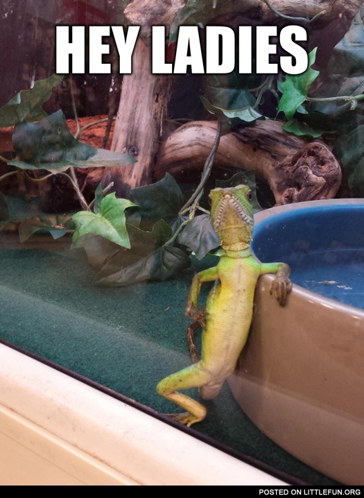 Sexy reptile