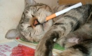 Cat with cigarette