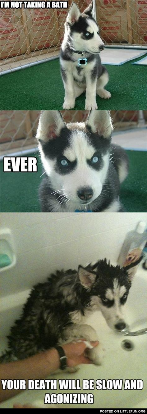 Evil husky and bath