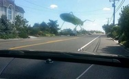 Grasshopper on my windshield