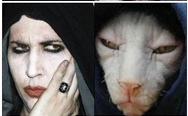 Cats That Look Like Celebrities