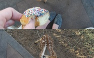 Deer likes donuts with sprinkles