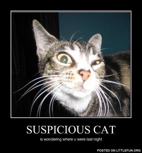 Suspicious Cat Meme