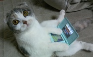 Cat playing with an Nintendo DS