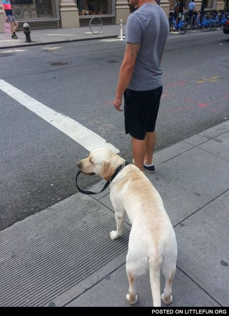 Dog lead. Ideal dog.