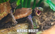 Wrong hole turtle.