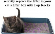 Litter box with Pop Rocks