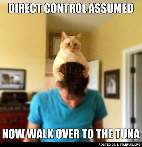 Direct control assumed, now walk over to the tuna