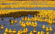 28,000 plastic ducks from a container lost in the sea. Yay, rubber duckies!