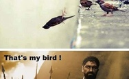 """This is Sparta"" birds"