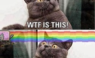 WTF is this? It's nyan cat.