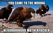 You came to the wrong neighborhood motherf**ker. Eagles.