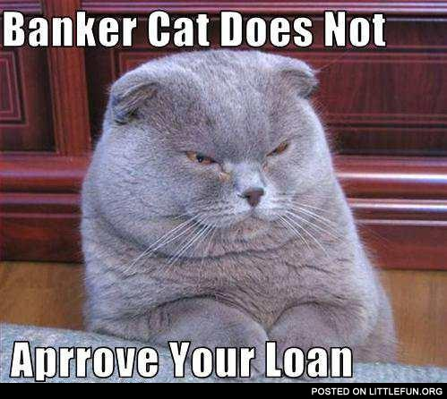 Banker cat does not approve your loan