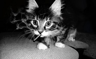 A smoking cat