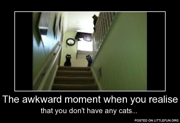 That awkward moment when you realise that you don't have any cats