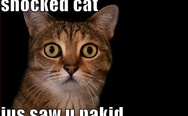 Shocked cat just saw you naked