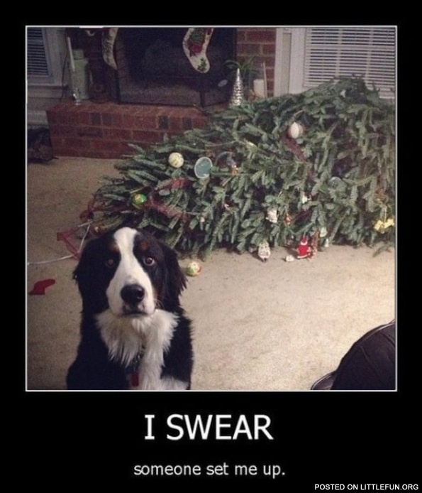 Dog and christmas tree. I swear, someone set me up.