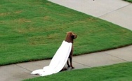 NIce cape. Chloe has taken the house's security to a whole new level.