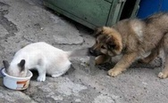 Puppy and cat fighting for food