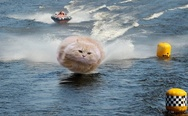 Hovercat at the boat racing