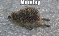 Monday hedgehog