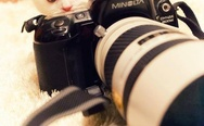 Kitten with a photocamera