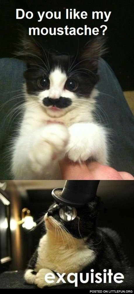 Cat with moustache vs. cat in a hat