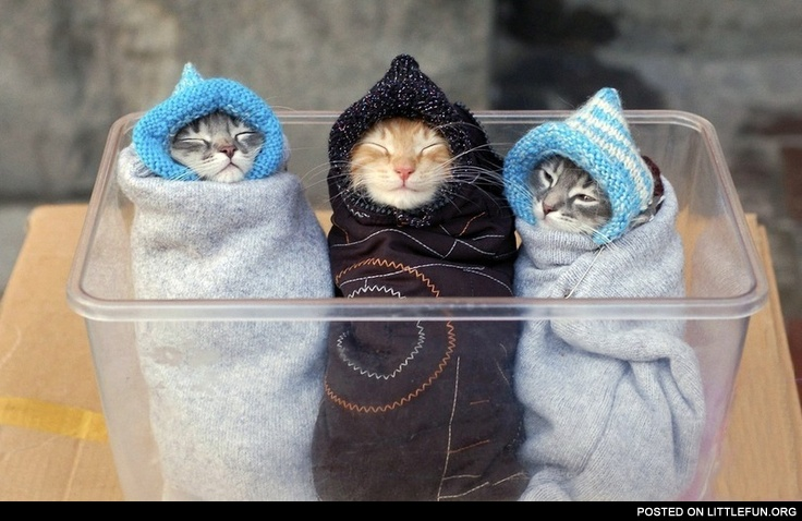 Kittens dressed like a babies