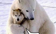 Polar bear and husky. I will love him, pet him, squeeze him, and call him George.