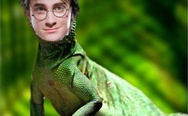 You are a lizard, Harry