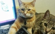 Cats and laptop. We need you to step away from the internet
