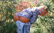 Pumpkin scarecrow. Dat ass.