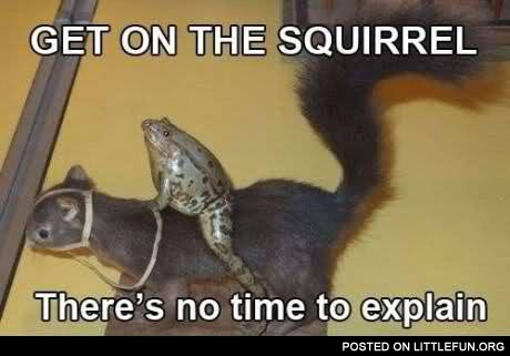 Frog on the squirrel. No time to explain.