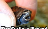Tiny turtle is pleased
