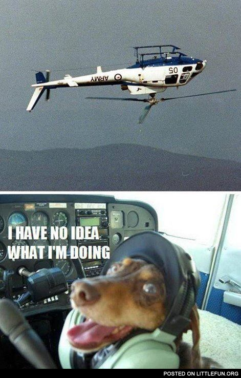 Dog in the helicopter. I have no idea what I'm doing.